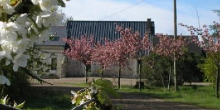 Self Catering in the Loire, Saumur